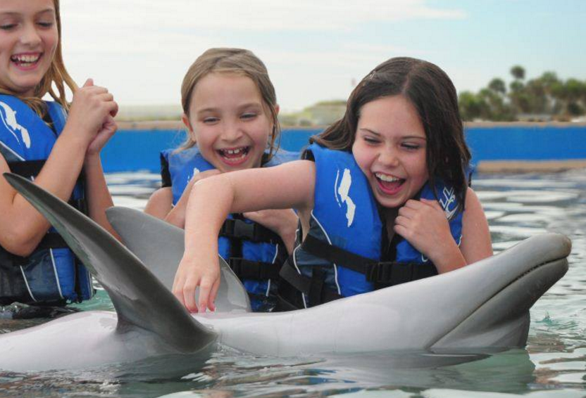 Non-Swim St Augustine Dolphin Program