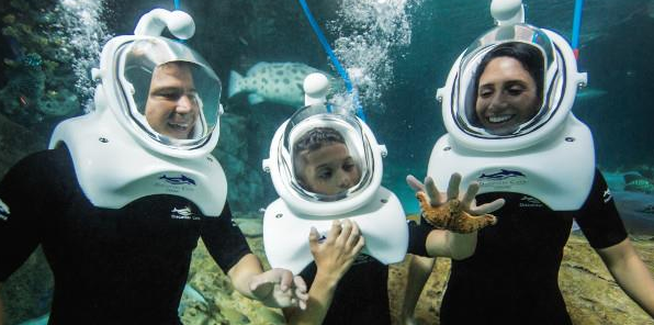 SeaVenture – a Great Add on to your Dolphin Swim Orlando